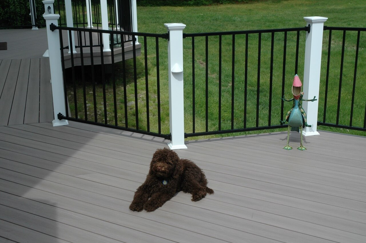 Dog sitting on deck