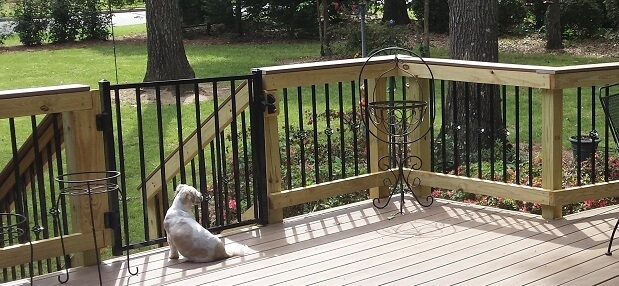 Dog sitting in front of deck gate
